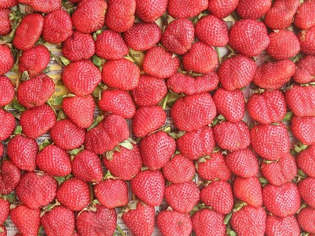 Thailand Strawberry